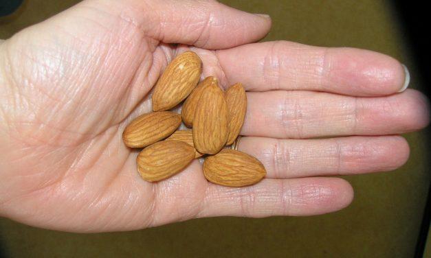 बादाम बढ़ाये आपका सौंदर्य (Beauty Benefit of Almonds, Be Beautiful with Almonds)